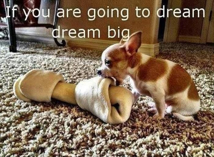 Visualize your Goals, Dream Big And Own your Destiny!